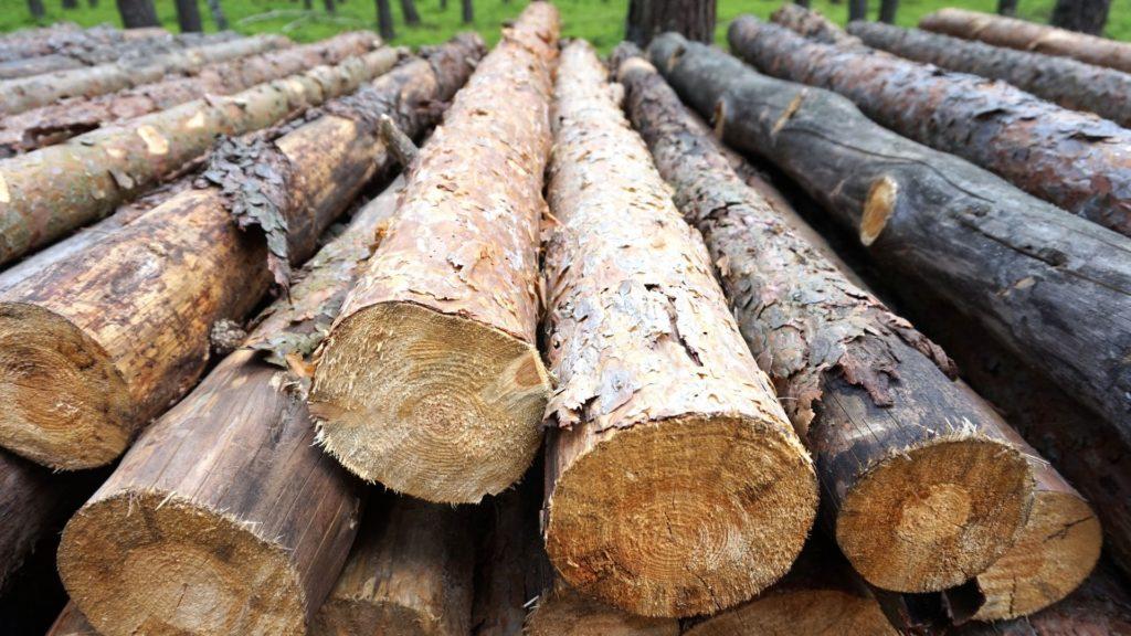 Dřevo a nakupovací desatero